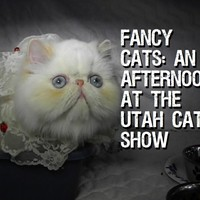 Fancy Cats: An Afternoon at the Utah Cat Show (Video)