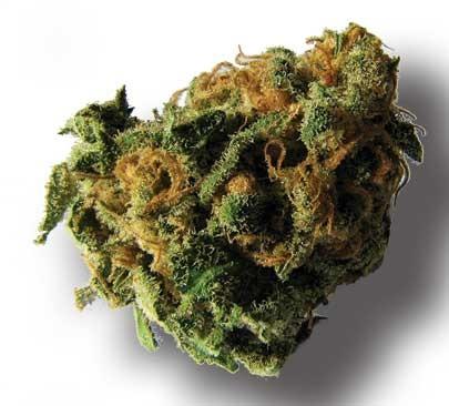 marijuanabud.jpg