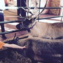 How angry should we be about Valley Fair Mall's live reindeer exhibit?
