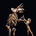 Momix: <em>Botanica</em>