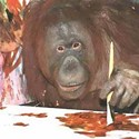 Orange Utahn: Art by Hogle Zoo's Orangutans