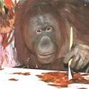 Orange Utahn: Art by Hogle Zoo's Orangutans