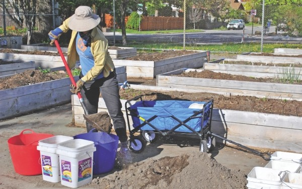 Rebecca Wallace shovels up the remains of her garden plot at the Lettuce Bee Community Garden on May 2. - COLBY FRAZIER