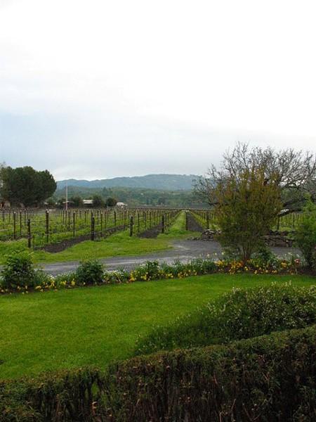 landmark_vineyards.jpg