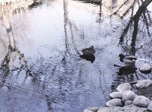 SKATING ALONG THE JORDAN RIVER PARKWAY ALLOWS YOU TO SEE BIRDS IN A NATURAL SETTING - WINA STURGEON