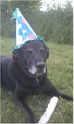 dog_with_hat_on.jpg
