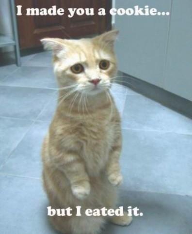 babysitting_cat.jpg