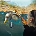 The Living Planet Aquarium Penguin Encounter