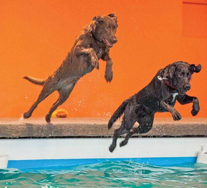 Barley's Canine Recreation Center