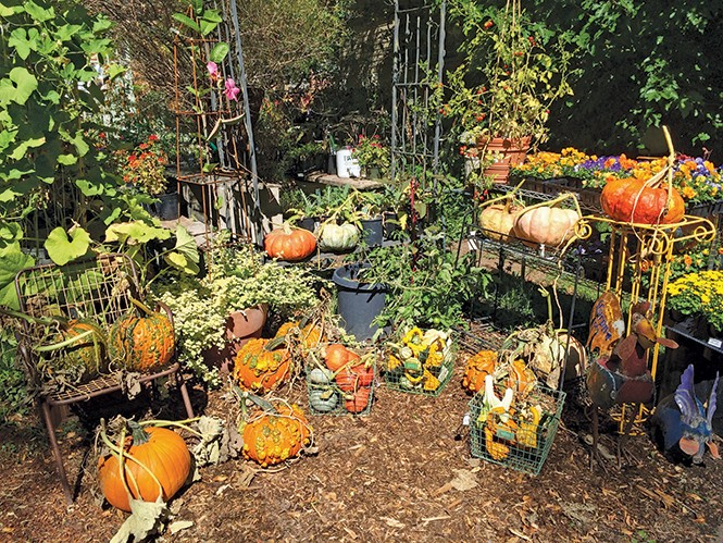 Traces Organic Garden