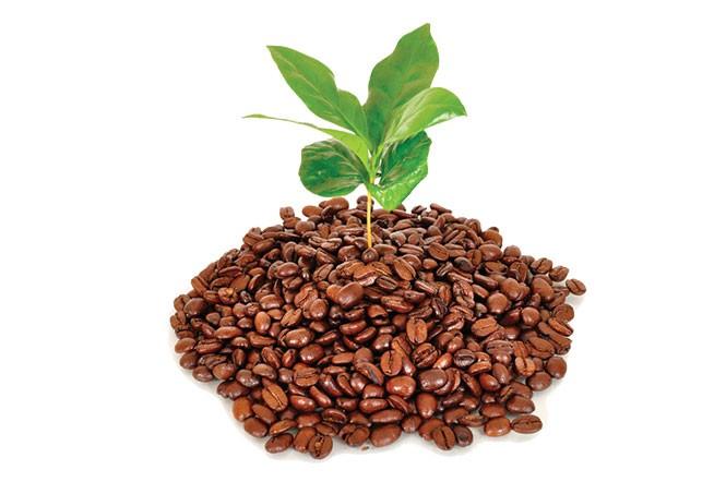 organic-coffee-grounds.jpg