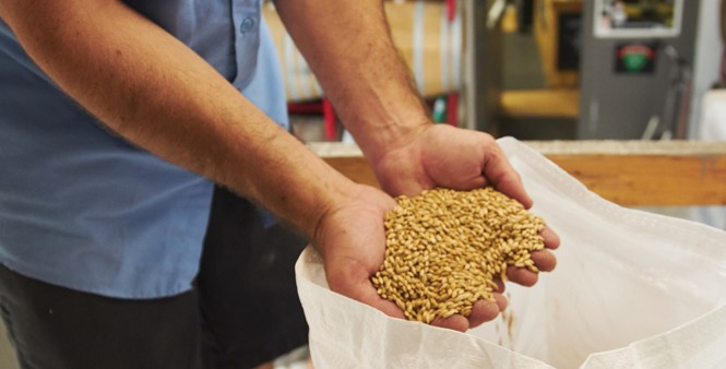 2. Brewmaster Kevin Templin sifts through grain imported to Red Rock from Germany.