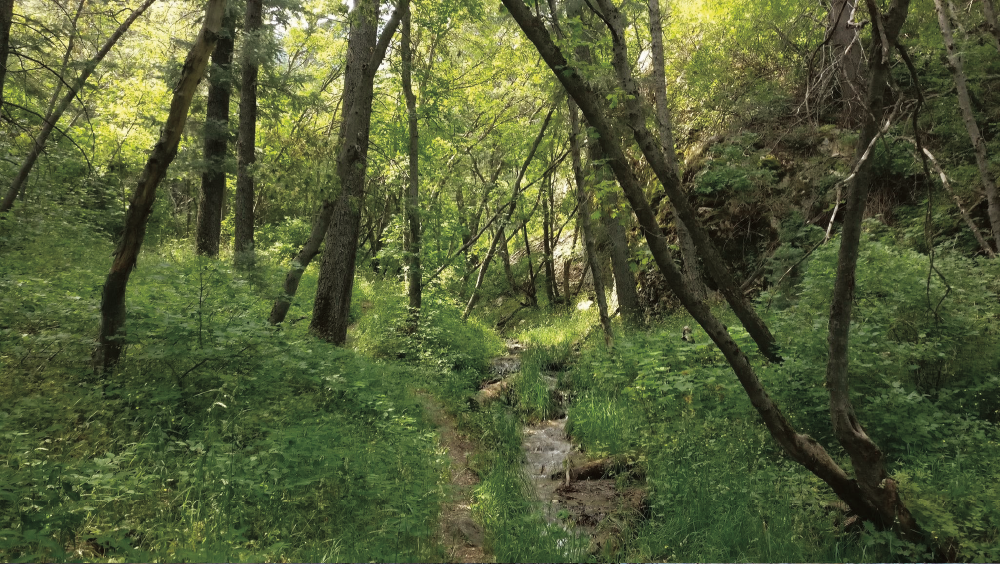 Although $435,000 in LWCF money has been put toward the Coldwater Forest Legacy Project in Northern Utah, conservation advocates say there is still a need for funds to complete the project.