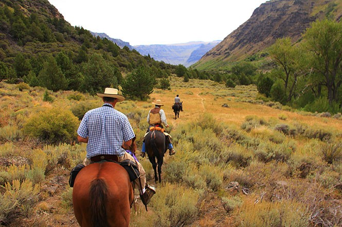 horses_in_wilderness_11573036646_.jpg