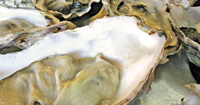 Oysters on the half-shell at Current Fish & Oyster - DEREK CARLISLE