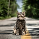 Movie Reviews: Pet Sematary, Shazam, Dragged Across Concrete, The Best of Enemies