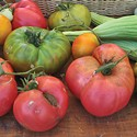Tomato Celebration, Think Veg and more