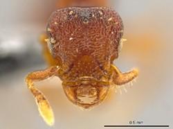 ants_3.jpg