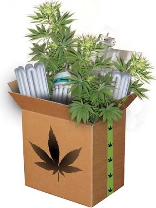 box_of_weed.jpg
