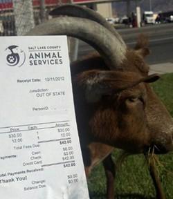 goat_ticket.jpg