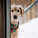 Winter Weather With Dogs