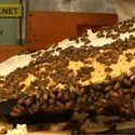Zionized 52: Urban Bee Keeping