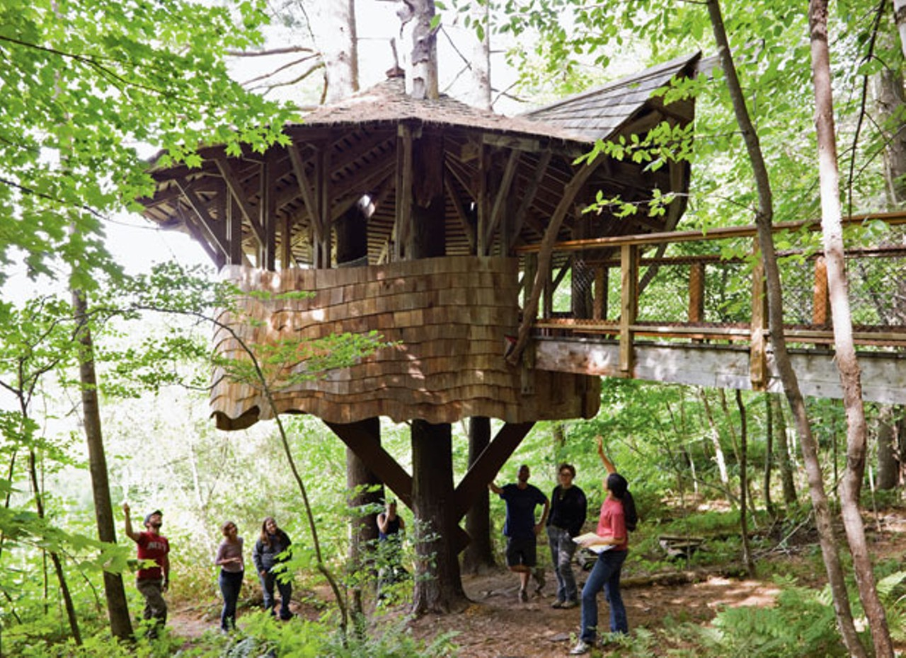 How Ti Build A Tree House Seven Days To Fie