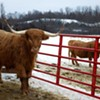A Writer Says Farewell to Her Beef Cows — at a New Mobile Slaughter Unit