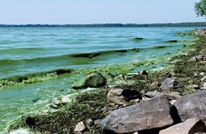 Algae washing ashore on Lake Champlain - FILE: KATHRYN FLAGG