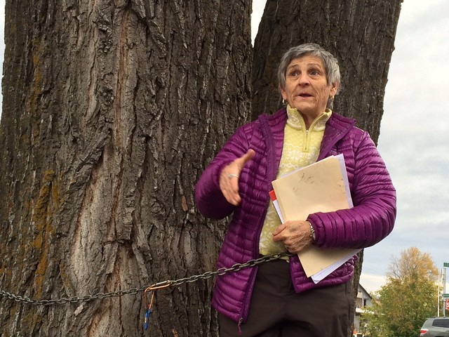 Ann Taylor does not want this tree to be cut down. - JOHN JAMES