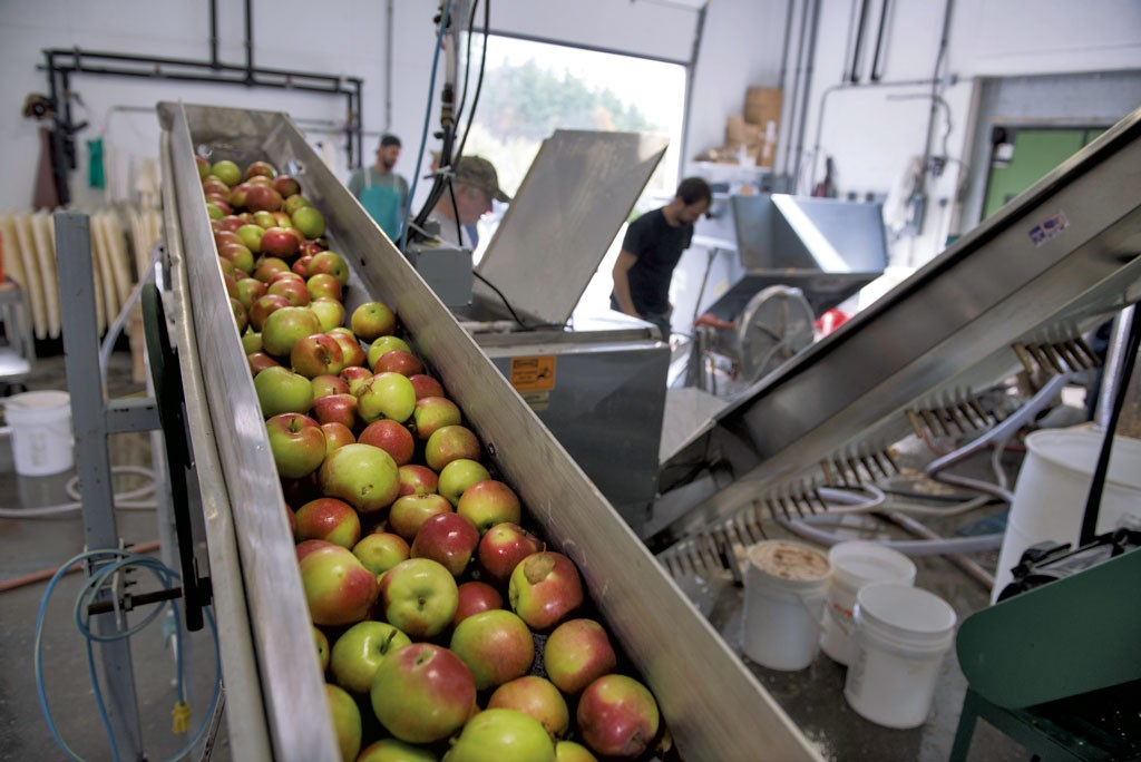 Apples being fed into a grinder prior to pressing at Happy Valley Orchard - CALEB KENNA