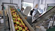 Vermonters Sow Seeds for the 'Napa Valley of Hard Cider'