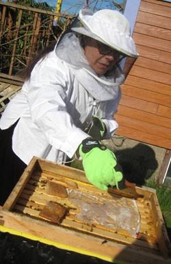 food-bees.jpg