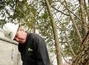 Work: Tree Doctor Bill deVos
