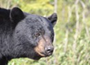 Bears, Dogs and Hogs — Oh, My! Animal-Themed Laws Enacted in 2013