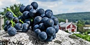 grapesvalleycrop.jpg