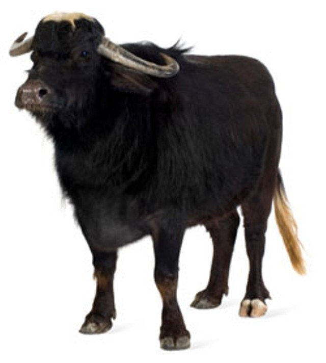 foodnews-buffalo_0.jpg