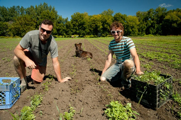 f-pitchforkfarm-mt.jpg