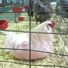 Champlain Valley Fair Revives Farm Feast