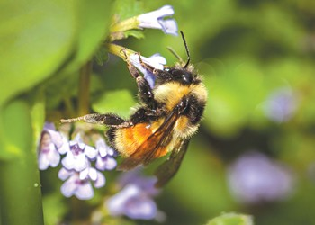 The Vermont Atlas of Life Project Aims to Document All Living Things