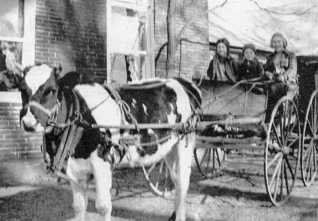 Cow and buggy - COURTESY OF CAMBRIDGE HISTORICAL SOCIETY