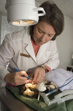 MATTHEW THORSEN - Dr. Kessler doing dental work on Tess