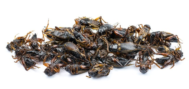foodnews-bugs.jpg