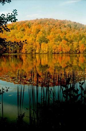 d1d80737_fall_foliage_.jpg