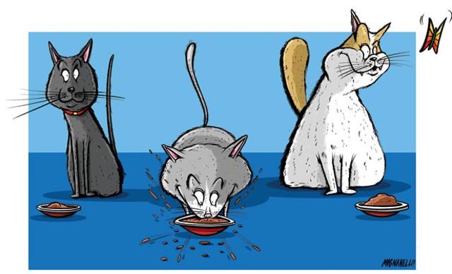 food-catfood.jpg