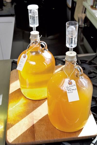 Fermenting cider - MATTHEW THORSEN