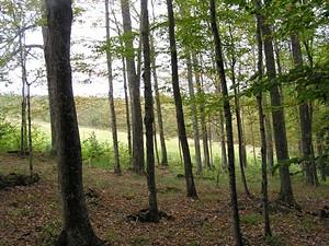 8be970be_meadow_through_trees.jpg