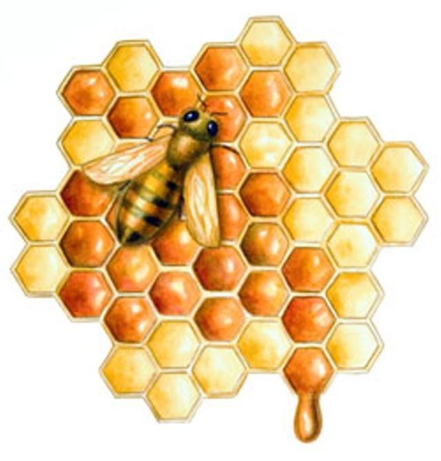 foodnews-bee.jpg