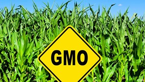 In Court, Vermont Makes Opening Salvo in Defense of GMO Law