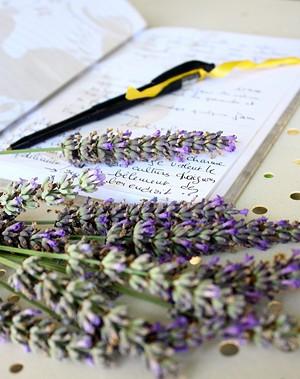 4737527c_lavender_writes.jpg
